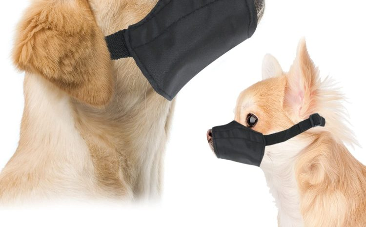 Canine Muzzles Dog Life Today